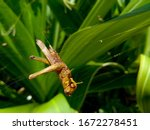 Grasshoppers Die Because They...