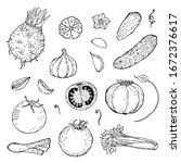 set of hand drawn vegetables.... | Shutterstock .eps vector #1672376617