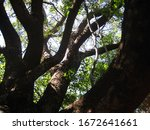Sturdy Thick Branches And...