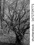 Short Gnarled Tree In Black An...