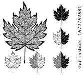 set of maple leaves. black and... | Shutterstock .eps vector #1672762681