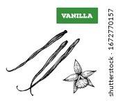 vanilla hand drawn vector... | Shutterstock .eps vector #1672770157