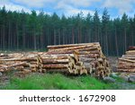 woodpile in scottish forest | Shutterstock . vector #1672908