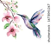 Flying Hummingbird  Watercolor...