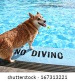 A Dog At A Local Public Pool