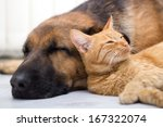 Stock photo cat and dog together lying on the floor and sleeping 167322074