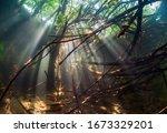 Underwater World. Branches Of...