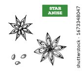 star anise hand drawn vector... | Shutterstock .eps vector #1673348047