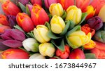 Spring tulips floral tulip bunch