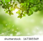 fresh and green leaves    Shutterstock . vector #167385569