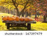 Wagon Full Of Pumpkins For Sal...