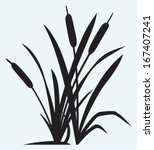 Silhouette Reed Isolated On...