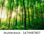 Spring Forest Trees. Nature...