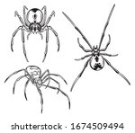 set of spiders. collection of... | Shutterstock .eps vector #1674509494