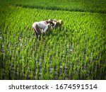 singosari   indonesia   march... | Shutterstock . vector #1674591514