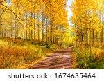 Golden Forest Landscape In...
