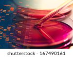 petri dishes and liquid... | Shutterstock . vector #167490161