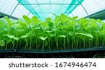 planting seedlings of farmers...   Shutterstock . vector #1674946474