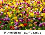 Beautiful Flowers In Bloom In A ...