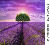 Provence   Tree In The...