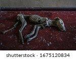 Mummified Dog On The Carpet In...