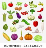 vector vegetables and salads.... | Shutterstock .eps vector #1675126804