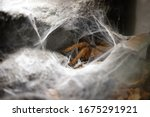 Spiders Are Climbing Out Of Th...