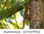Squirrel On The Tree Trunk In...