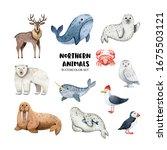 Northern Animals Watercolor Set ...
