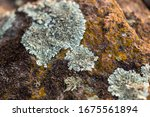 mossy rock surface natural... | Shutterstock . vector #1675561894