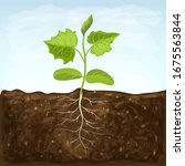 young seedling of vegetable...   Shutterstock .eps vector #1675563844
