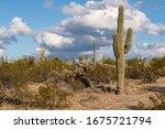 Various Cactus And Desert...