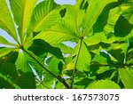 lush green leaves background in ... | Shutterstock . vector #167573075