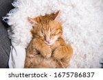 Ginger cat sleeps in funny pose....