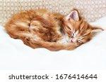 Ginger Tabby Kitten Cute...