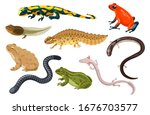 Amphibian vector illustration set. Exotic cartoon tropical amphibia, colorful sitting toad and frog life cycle tadpole, salamander, triton caecilian. Flat animals pets for zoo icons isolated on white