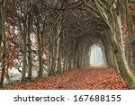 Empty Tunnel Of Trees In Autumn.