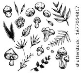 vector set of hand drawn forest ... | Shutterstock .eps vector #1677054817