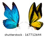 Stock photo colorful beautiful butterfly close up a macro background 167712644
