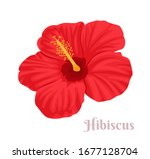 hibiscus isolated on white... | Shutterstock .eps vector #1677128704