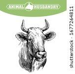 breeding cow. animal husbandry. ...   Shutterstock .eps vector #1677264811