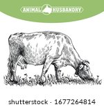breeding cow. animal husbandry. ...   Shutterstock .eps vector #1677264814