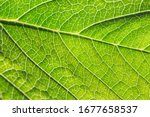 Close Up Of Green Leaf...