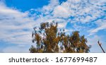 A tree and Sky on Background (Adobe Lightroom Edited )