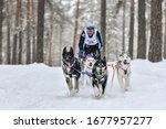 Sled dog racing. Husky sled dogs pull a sled with dog musher. Winter competition.