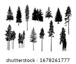 Set. Silhouettes Of Pine Trees. ...
