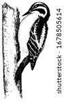 Downy Woodpecker  Vintage...