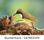 Sun Bird Feeding New Born Chicks