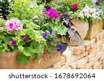 Colorful Balcony Flowers With...
