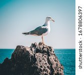 A Seagull Resting On A Rock...